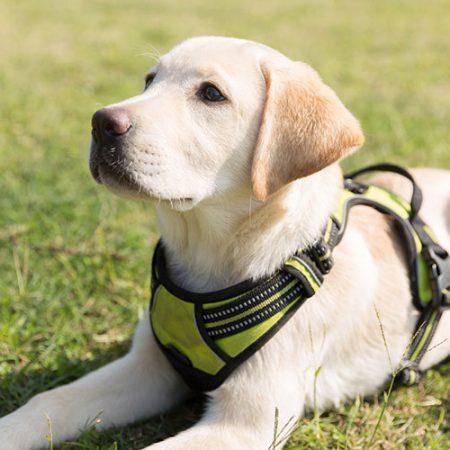Курсове за подрастващи кучета