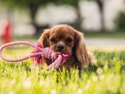 Puppy Club – училище и социализация за кутрета