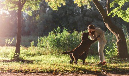 7 Youtube канала за обучение на кучета, от които можеш да научиш много