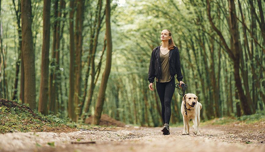 Обучение на кучета – защо, кога, как, какво, къде и кой?